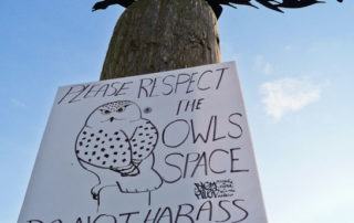Snowy Owl Sign at Boundary Bay