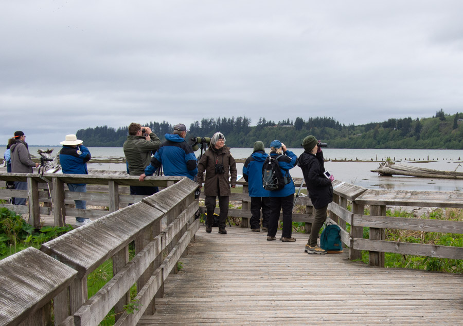 Birders at Grays Harbor Shorebird Migration