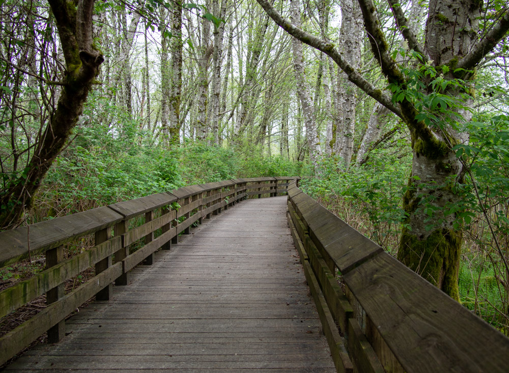 Grays Harbor Boardwalk