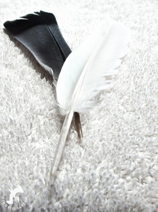 White and Blue pigeon feathers