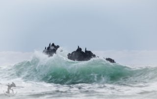 Cormorants on Stormy Sea
