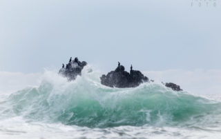 Cormorants on Rock in the Pacific Ocean