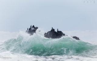 Cormorants on Rock in the Pacific Ocean