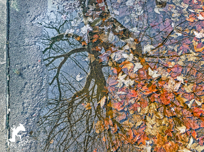 Autumn reflected in puddle