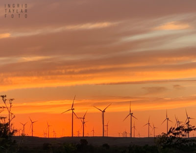 Rio Vista Sunset