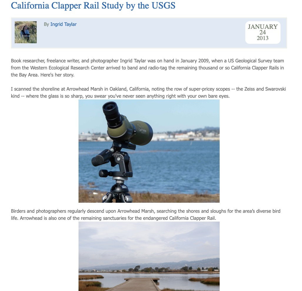 USGS California Clapper Rail Study