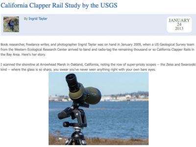 USGS Clapper Rail Study at Arrowhead Marsh