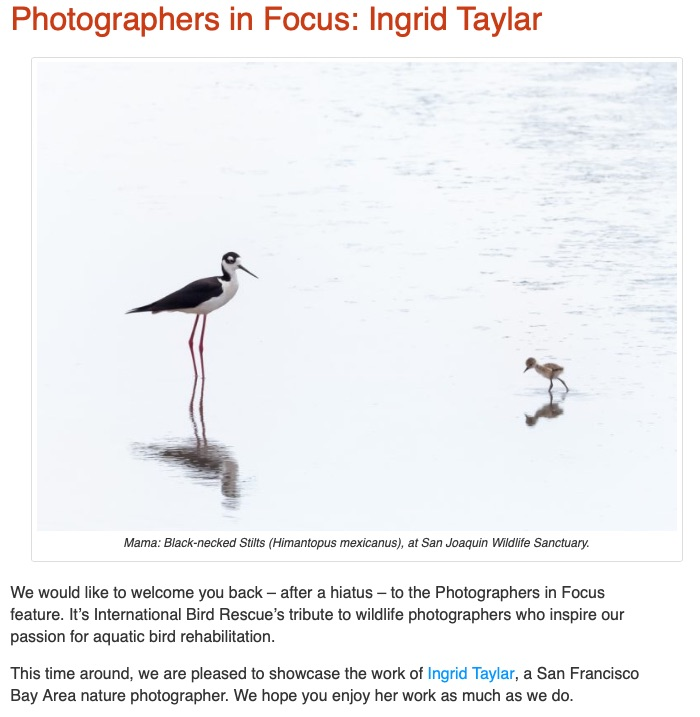 Photographers In Focus - Ingrid Taylar