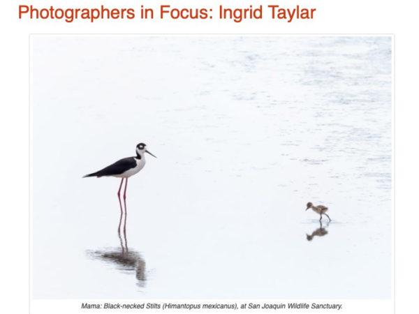 Photographers in Focus - Ingrid Taylar