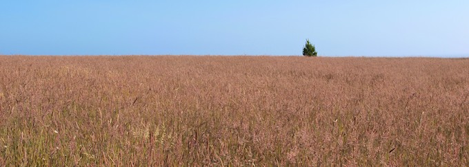 Lone Tree in Grasslands