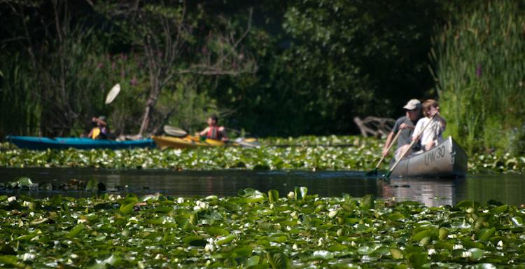 Canoes at Washington Park Arboretum