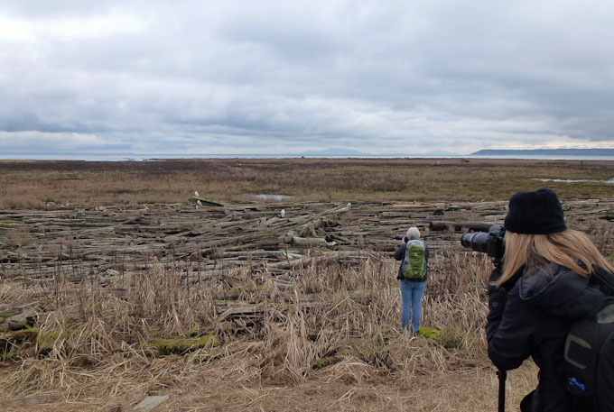 Photographing at Boundary Bay
