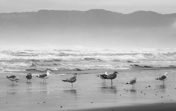 Gulls on Beach in Storm