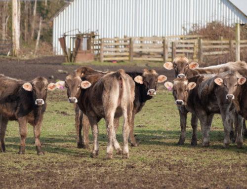 Livestock Production, Wildlife & Food Choices
