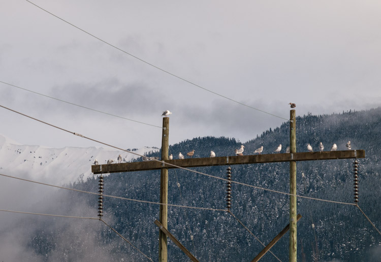 British Columbia Forest Moss