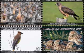 Wildlife Conservation Stamp 4-panel