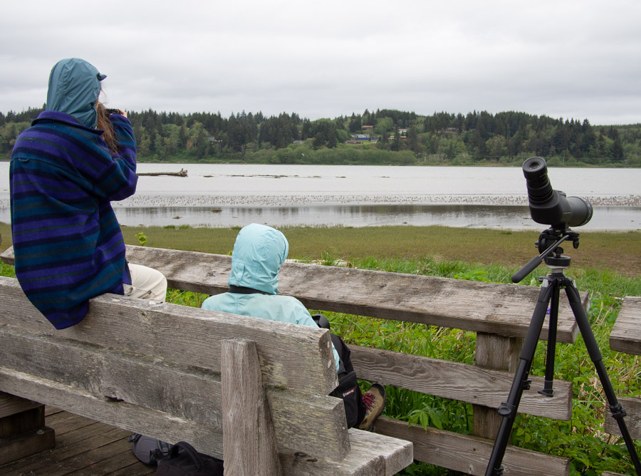 Birders at Grays Harbor Shorebird Migration