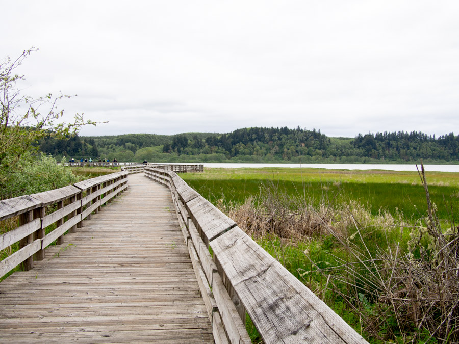 Grays Harbor Boardwalk for Shorebird Migration