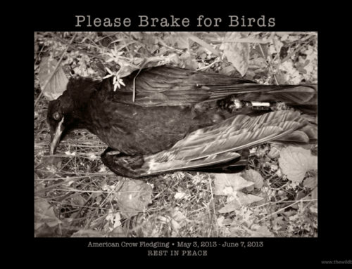 Please Brake for Birds