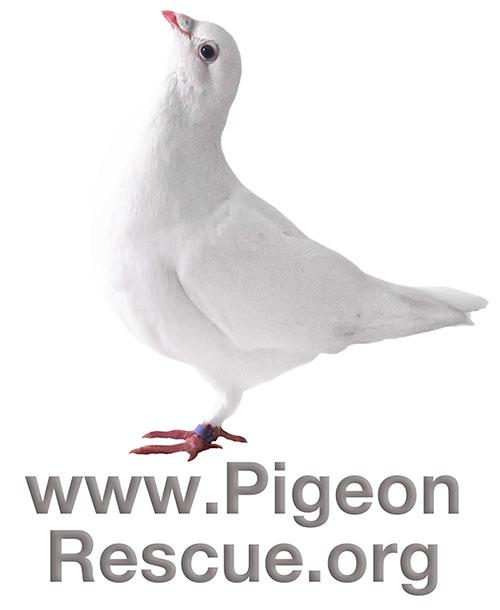 White Pigeon Logo