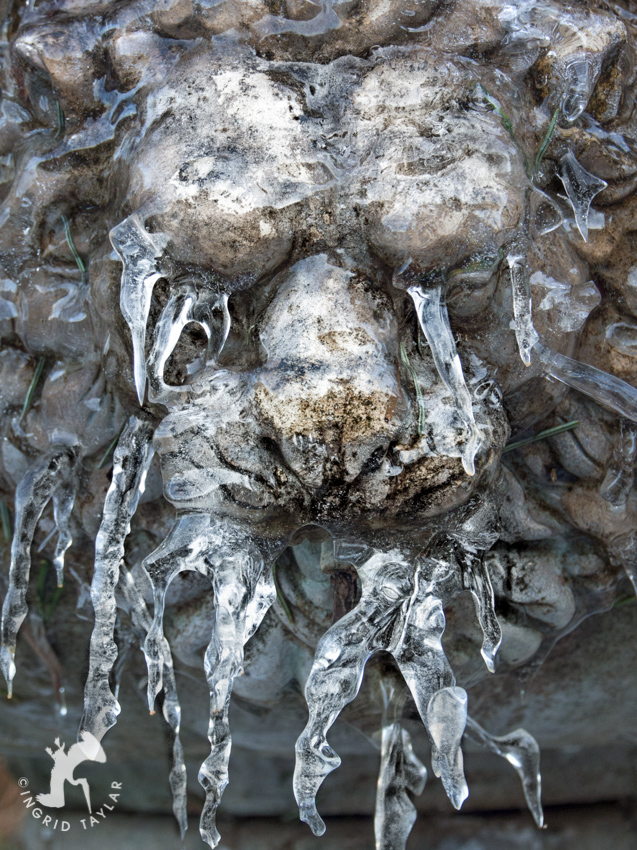 Lion Fountain Frozen with Ice