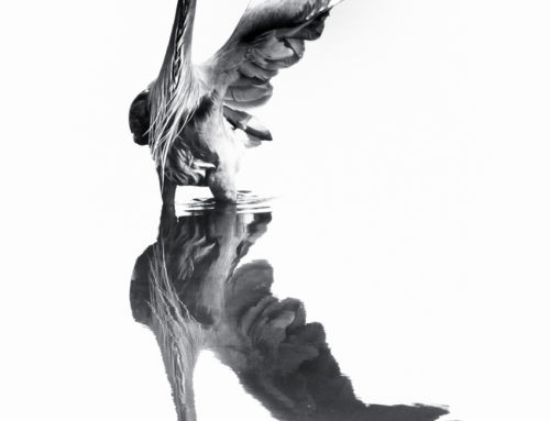 Rorschach Heron