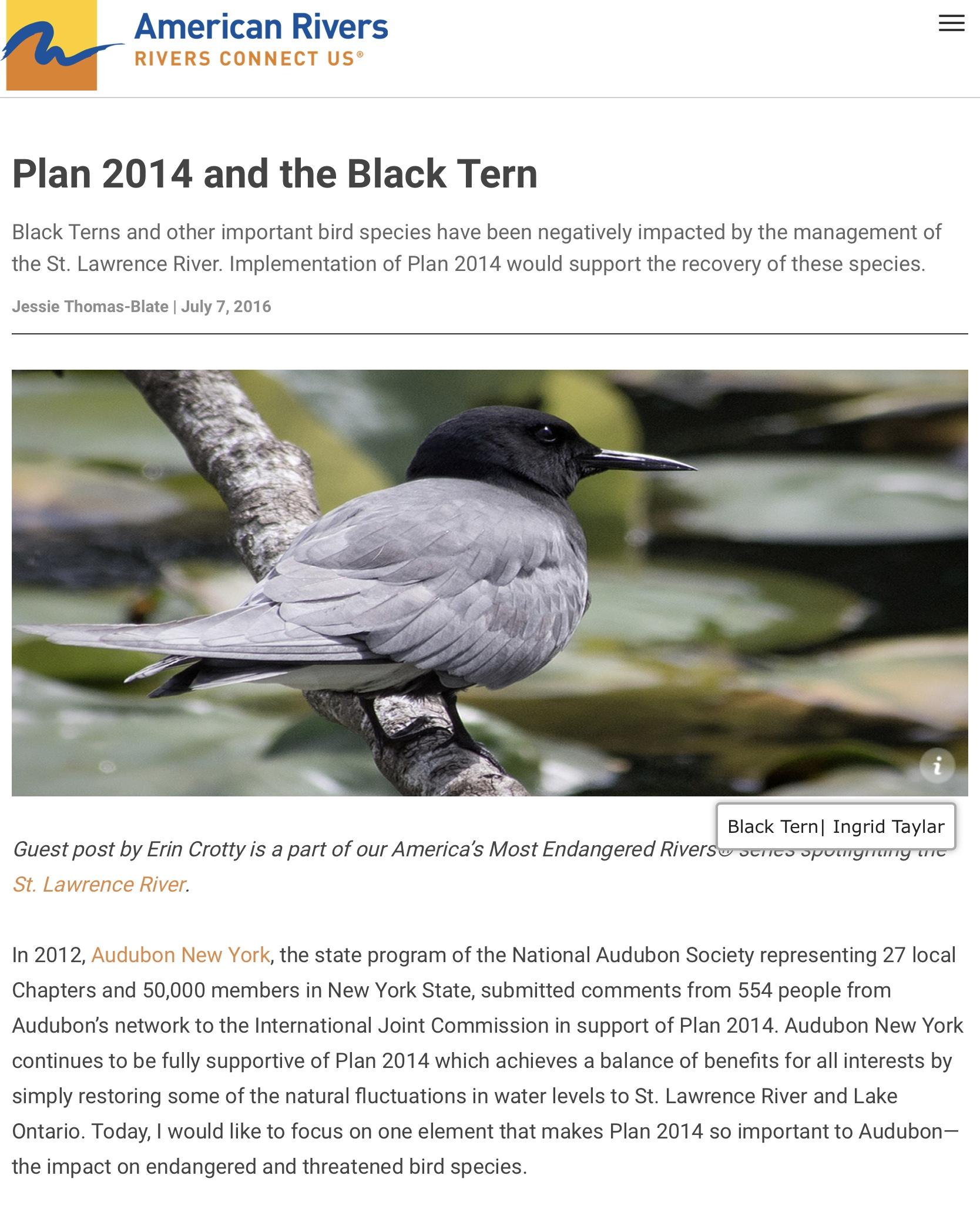 NRDC Black Tern