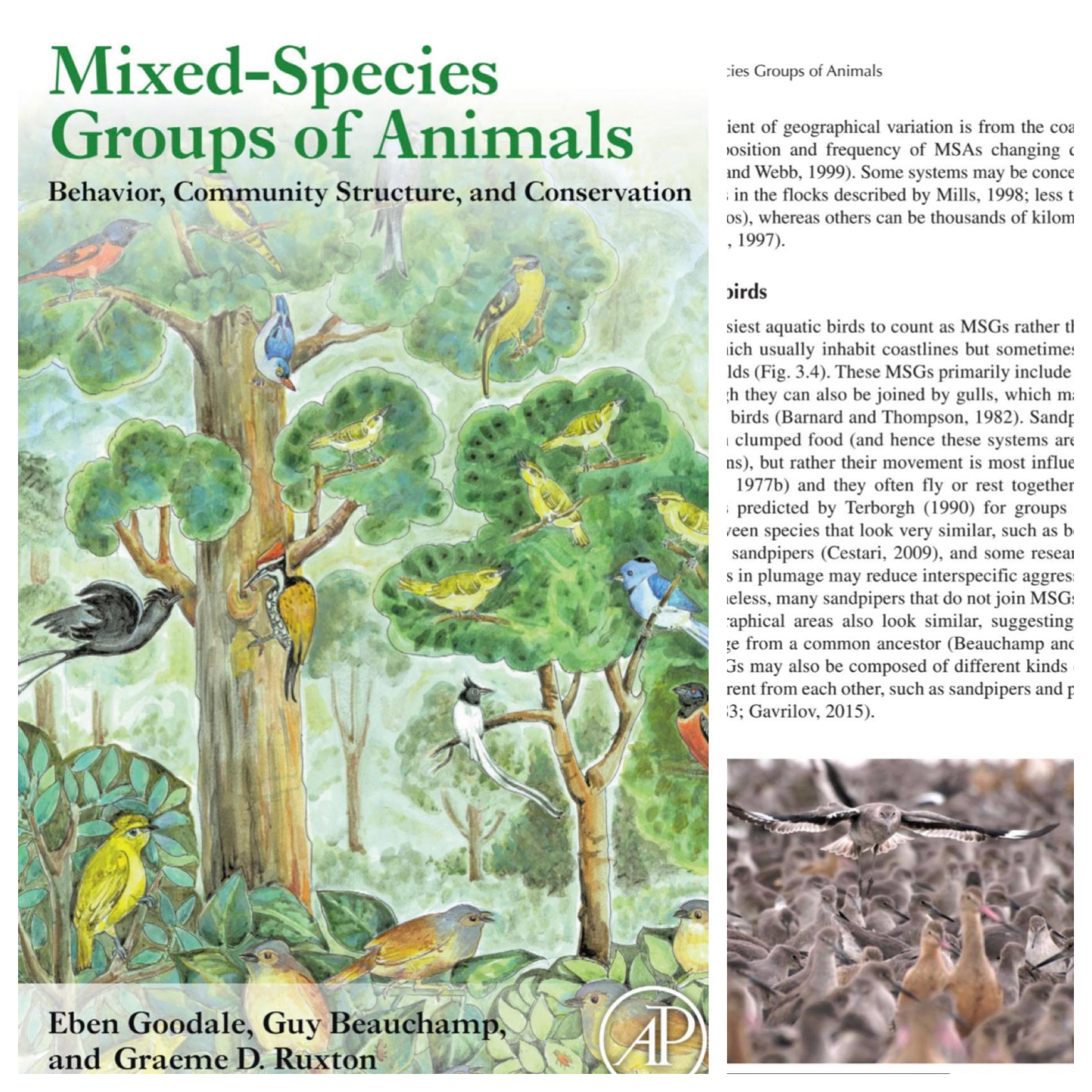 Mixed Species Groups of Animals
