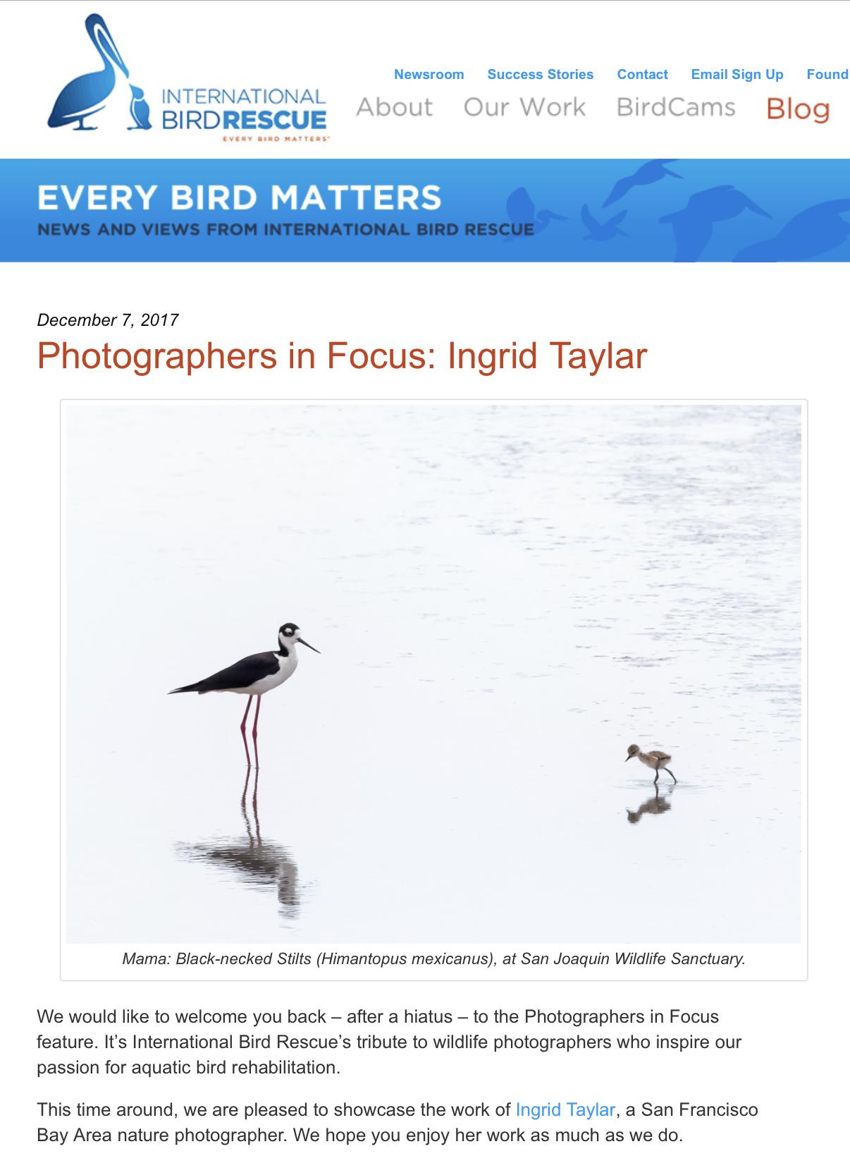 IBR Photographers in Focus