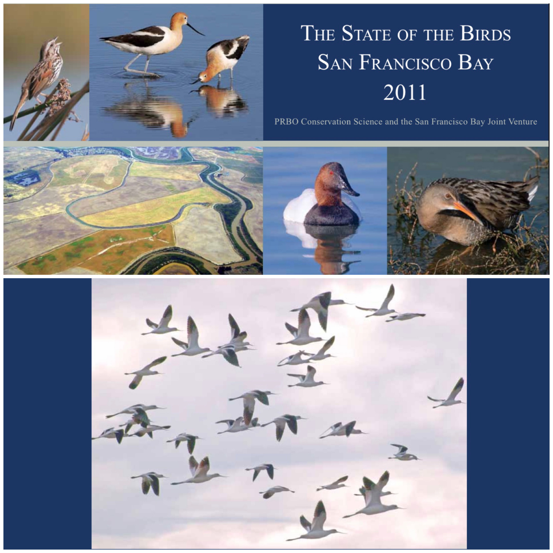 State of Birds San Francisco