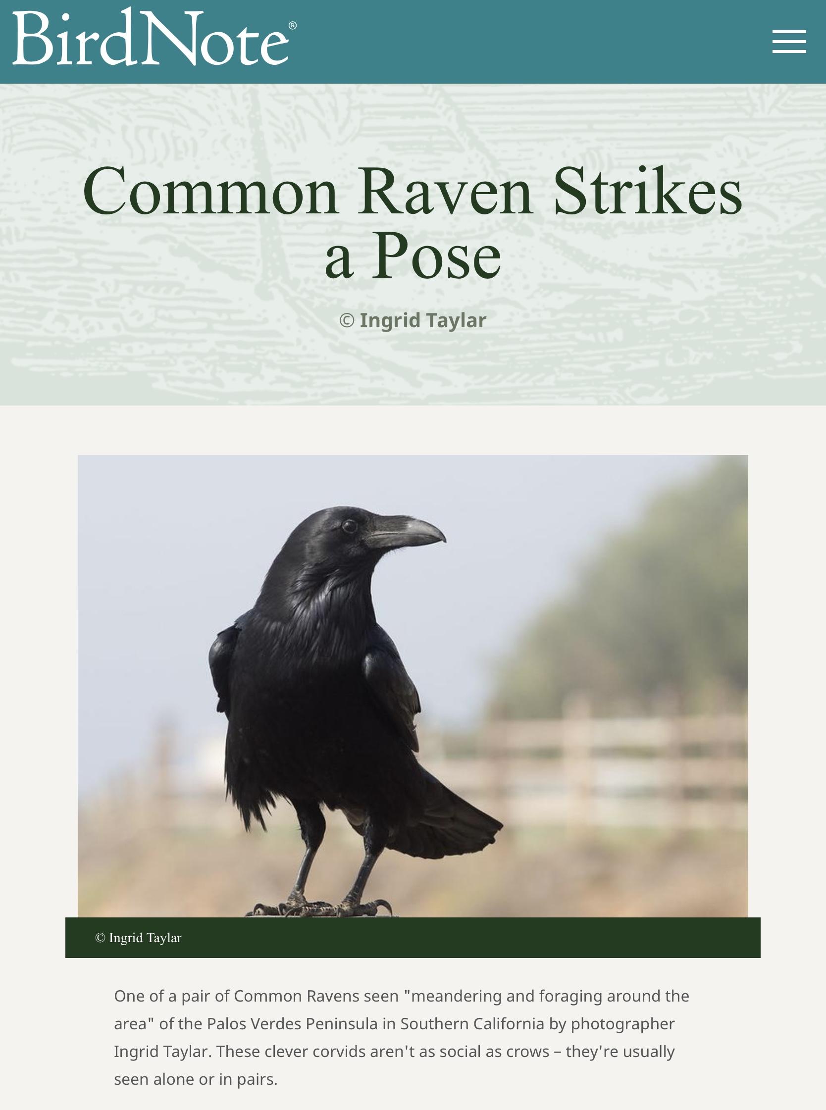 Raven Image at BirdNote
