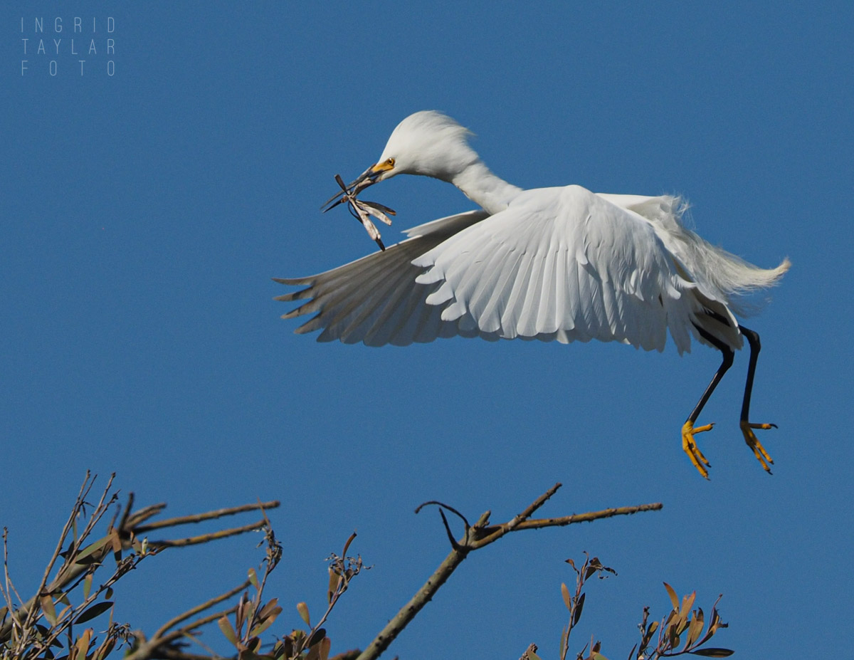 Egret Branch Transport