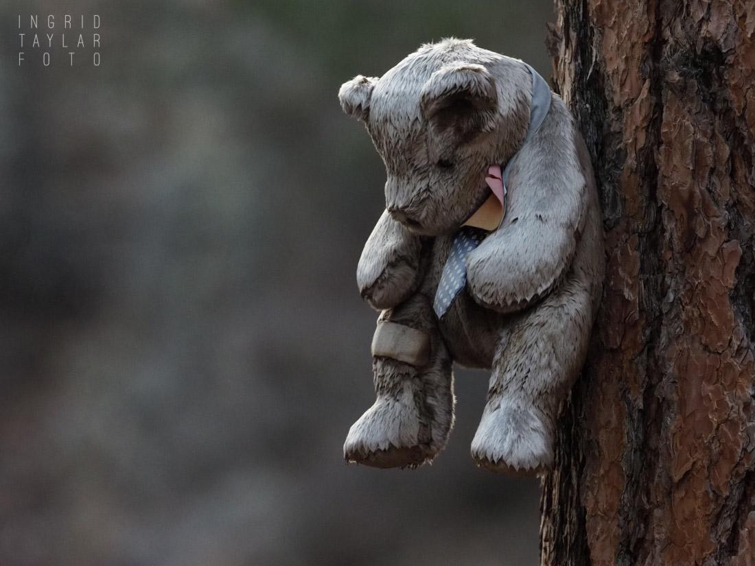 Frozen Bear Toy