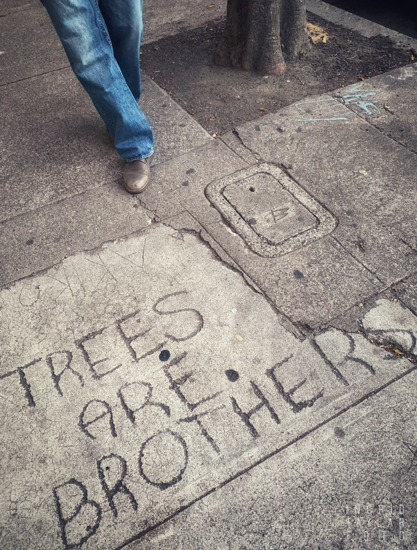 Trees are Brothers