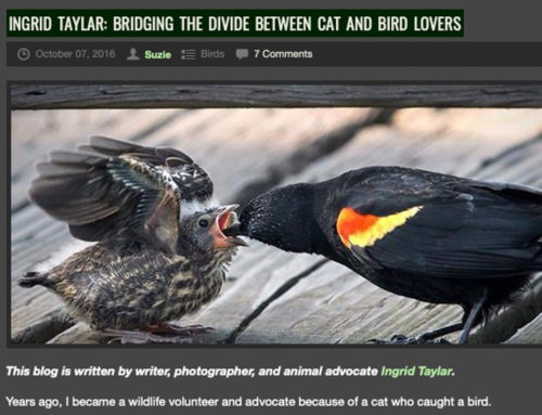 Bridging the Divide Between Cat and Bird Lovers