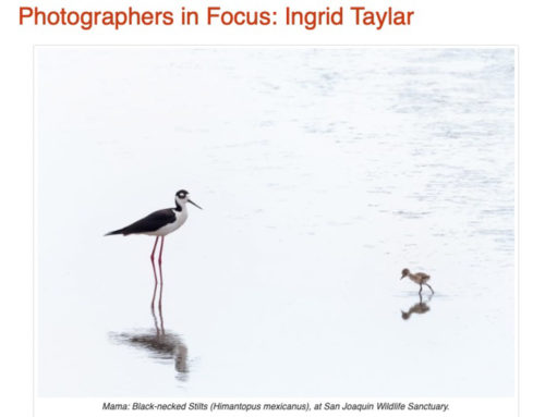 Photographers in Focus: International Bird Rescue