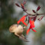 Bushtit on Flower at Lake Merritt