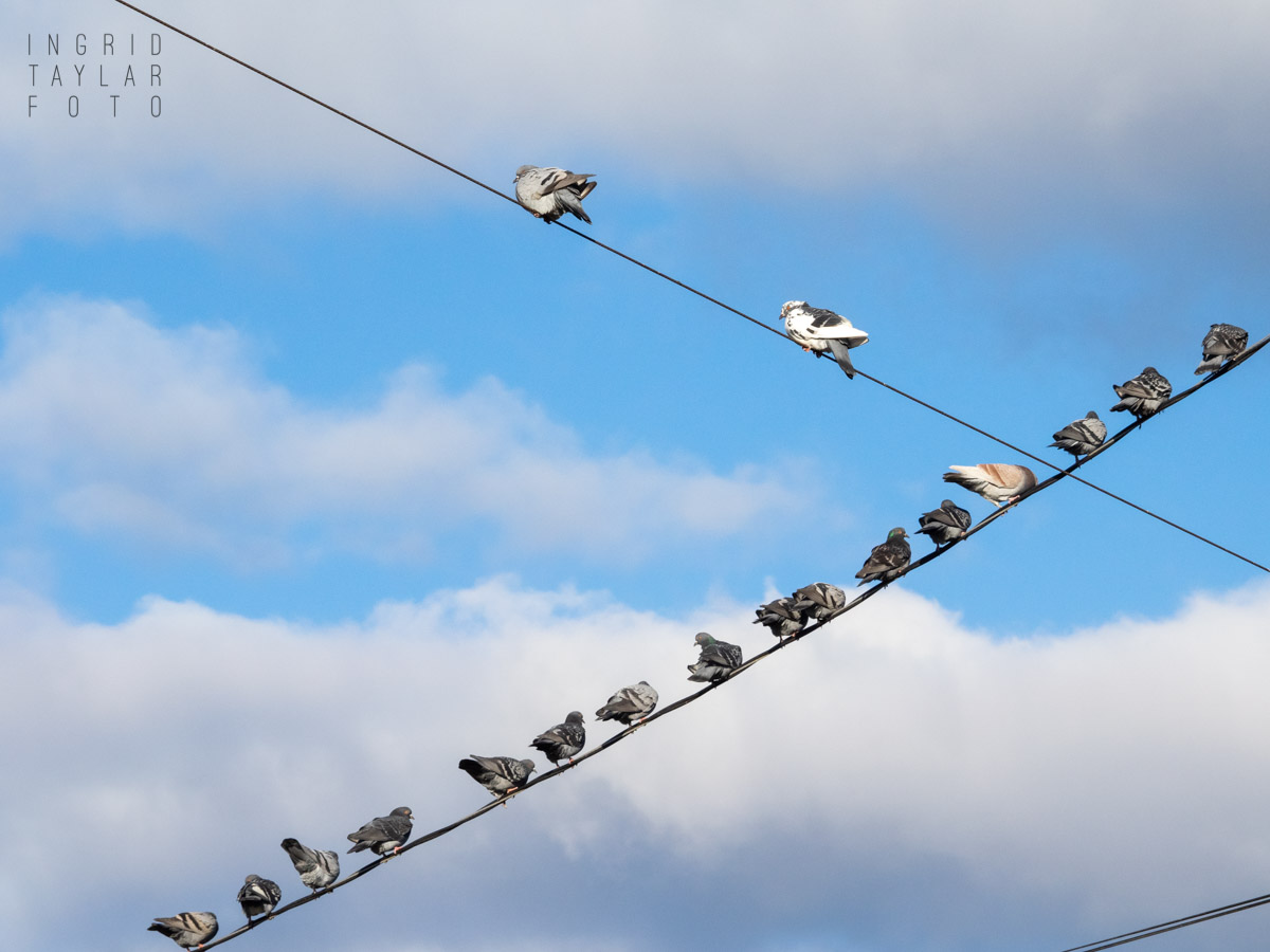 Pigeons on a Wire Against Clouds