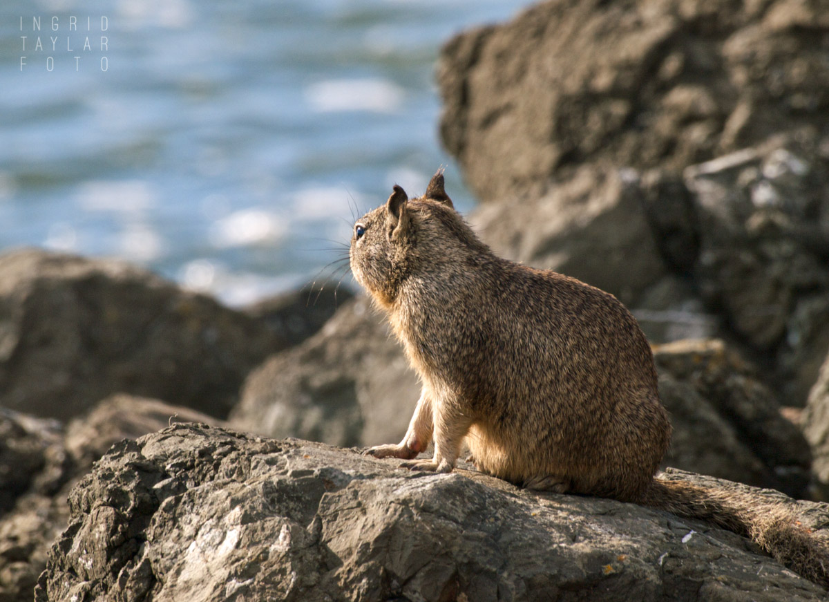 Ground Squirrel with a View