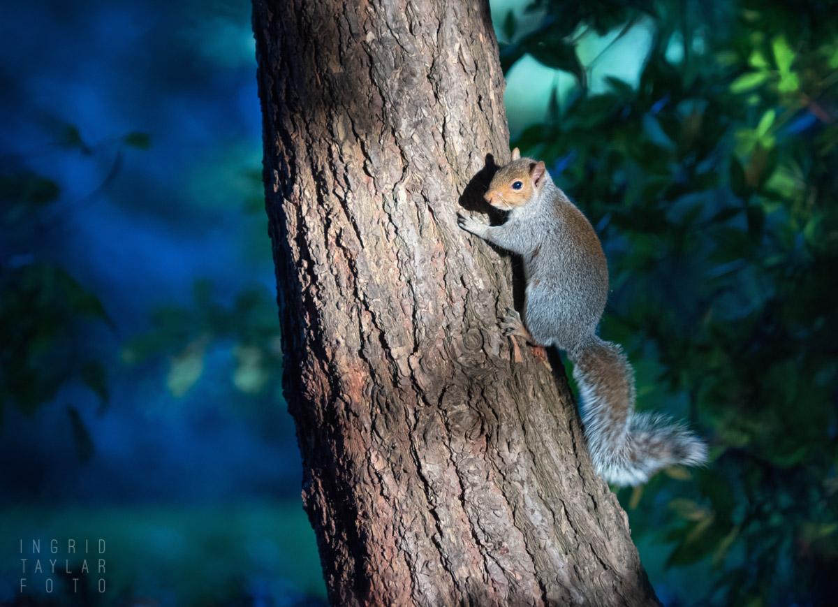 Squirrel Framed in Blue Light