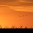 Sandhill Cranes and Windmills
